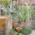 Pots and grasses